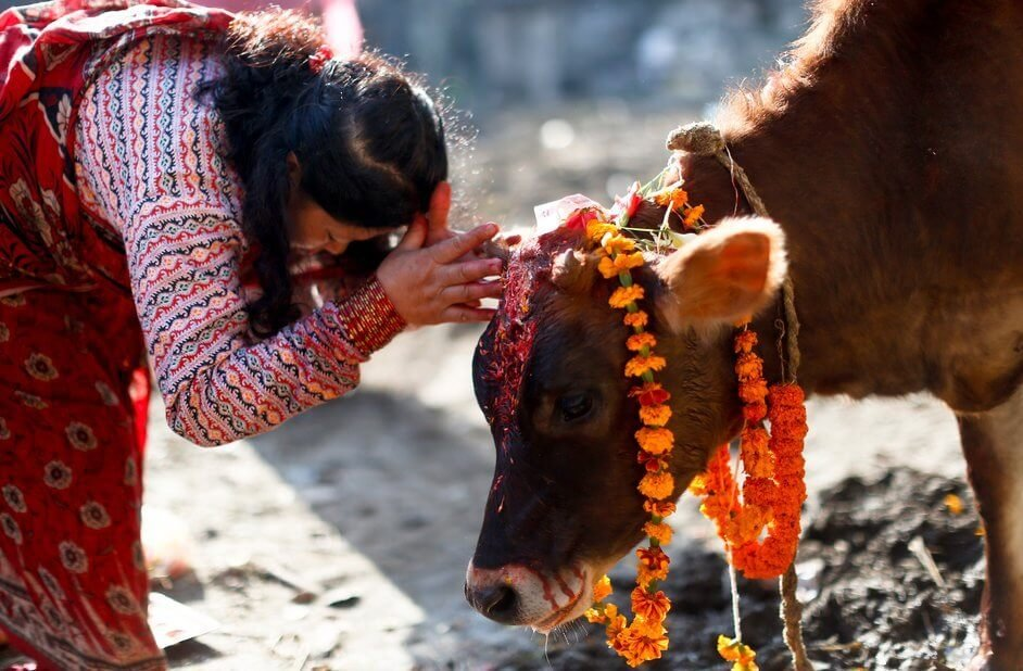 The Festival of Cows in Nepal: Facts about Nepal